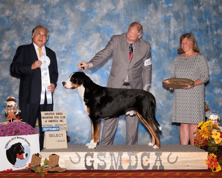CedarCove's M'bers Blue Moon Greater Swiss