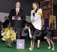GCH CH CedarCoves Stack and Deliver Sirens Trick Cent, Lincoln